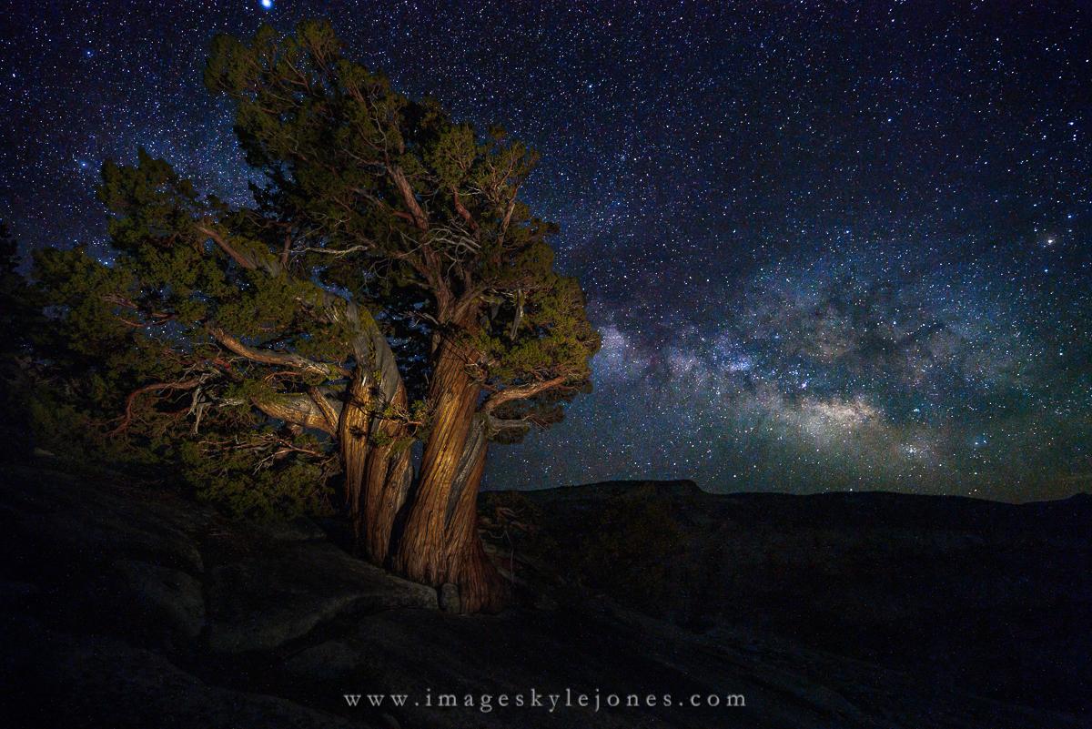 0498 Juniper and Milky Way_1200.jpg