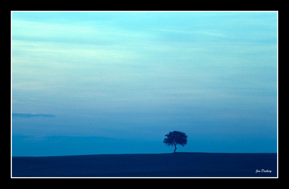 Bavaian-Tree-dusk.jpg