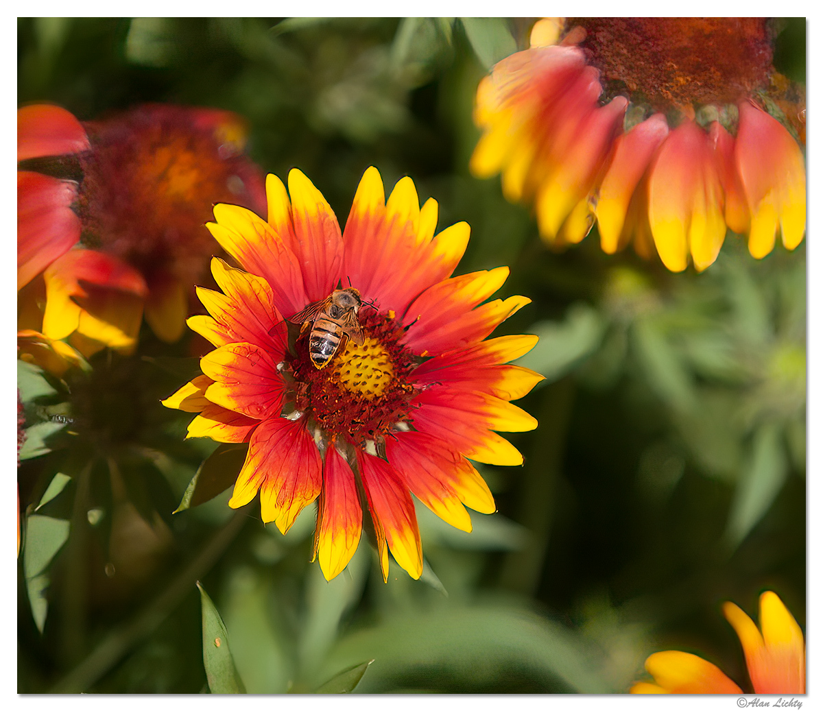 BeeWings.jpg