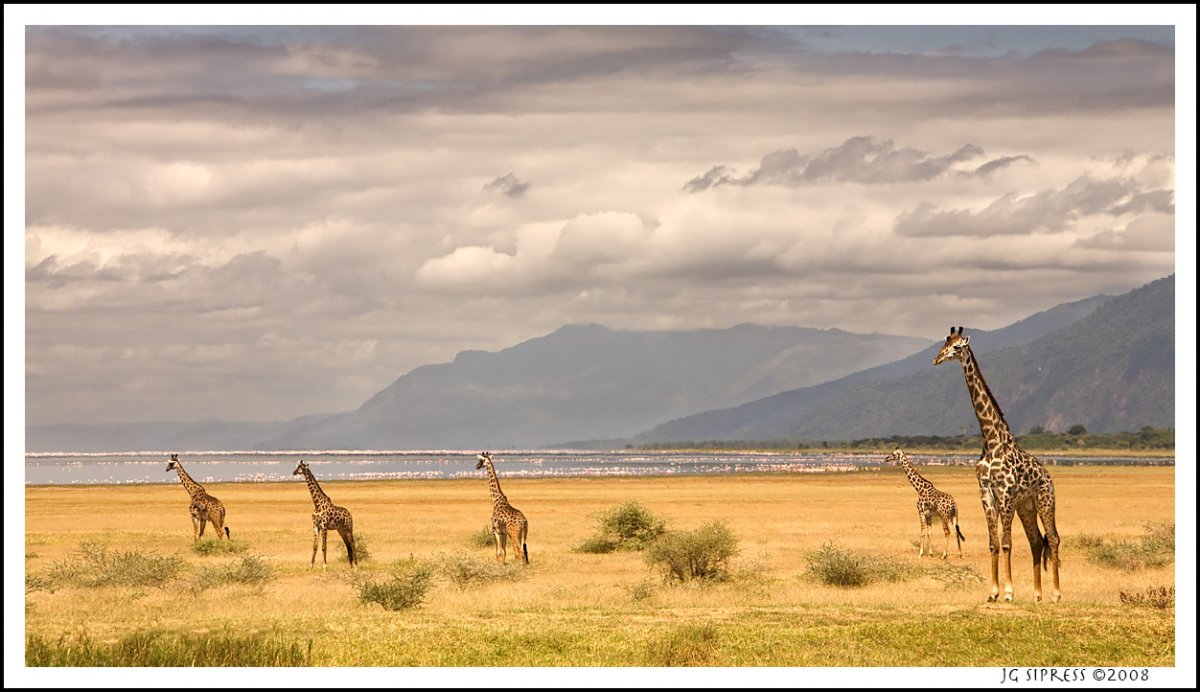 giraffeposter.jpg