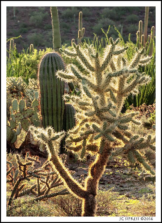 morningcactus2.jpg