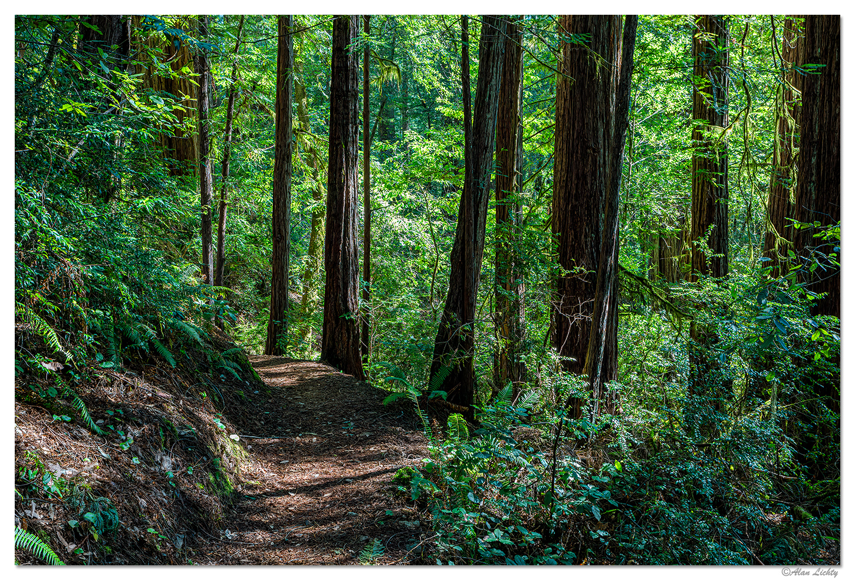 RNT-Trail1.jpg