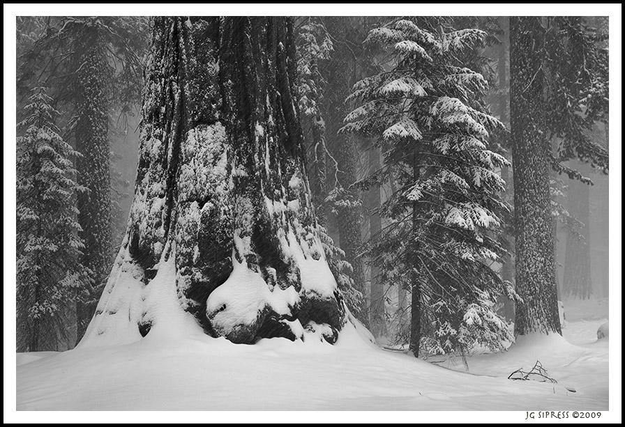 snowstormtree1.jpg