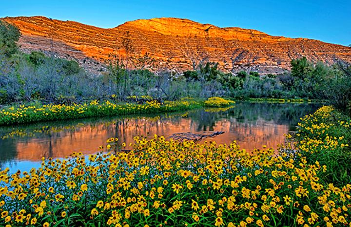 Verde River Sunflowers susnrise .jpg