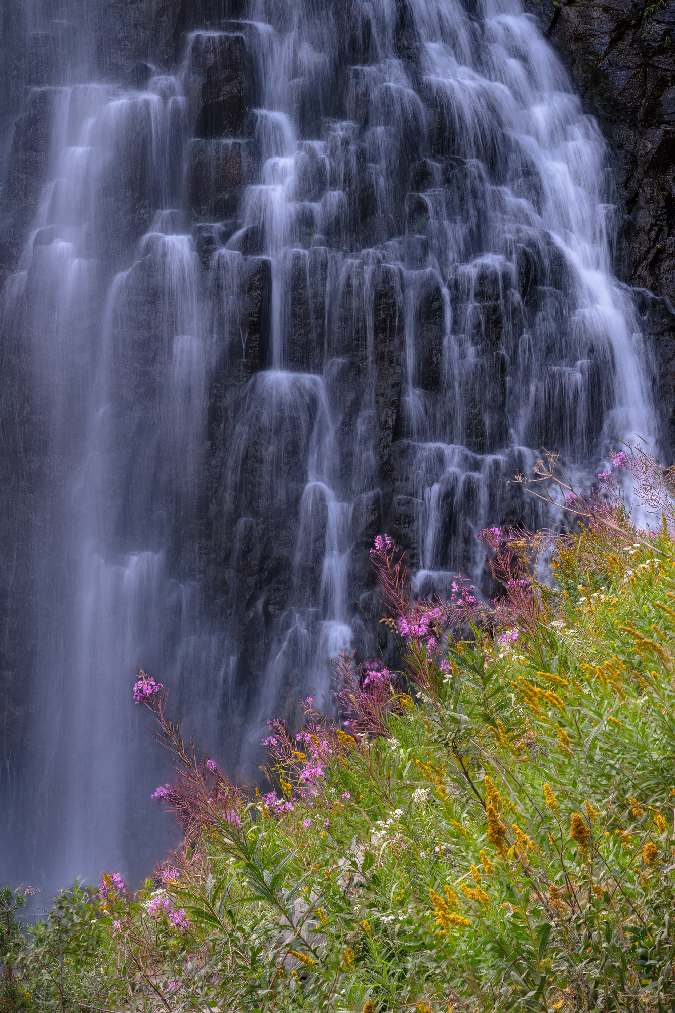 Watering the Flowers.jpg