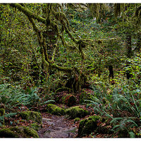 Coastal Rainforest Trail