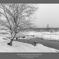 Blackwater River Beaver Dam Winter.jpg